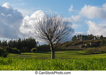 leafless, árvore, crescendo, em, galicia