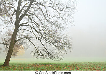 leafless, árvore, em, denso, nevoeiro, em, outono