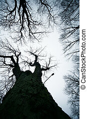 leafless, árvores
