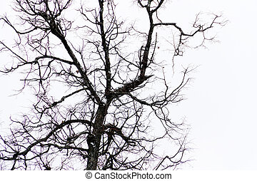 Leafless branches of park winter trees - Crooked dark...