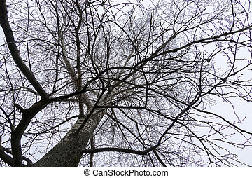 leafless, filiais árvore