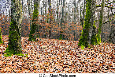 leafless forest in autumn. moss on tree trunks and weathered...