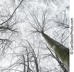 leafless, inverno, árvores.