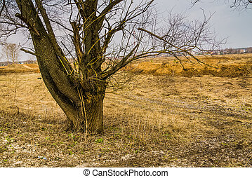 Leafless Lone Tree - Big alone tree with branches without...