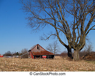 Leafless Maple Tree next to an Old