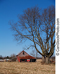 Leafless Maple Tree Next to an Old - Large leafless maple...