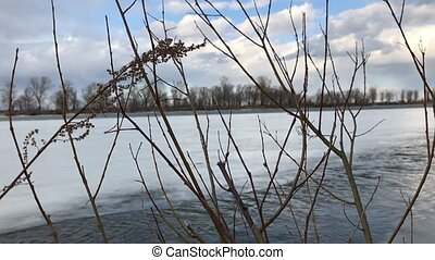 Leafless tree branches against a background of frozen river with a strong current