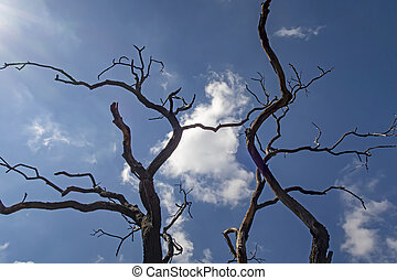 leafless tree branches in winter
