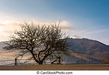 leafless tree by the road in mountains