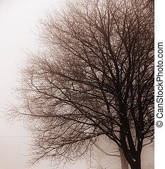 Leafless tree in fog - Foggy winter scene of single leafless...