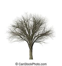 Leafless tree isolated on white