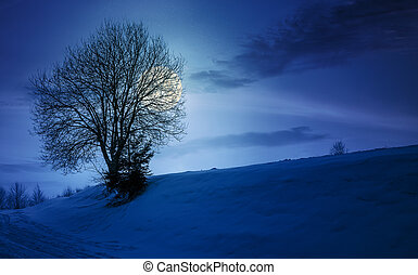 leafless tree on snowy slope at night in full moon light....