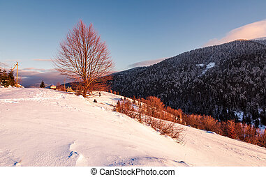 leafless tree on snowy slope in morning light. beautiful...