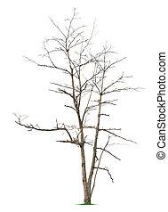 Leafless tree on white background