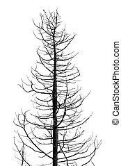 leafless tree - Leafless tree in the wintertime. Black and...