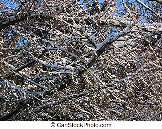 Leafless trees in winter