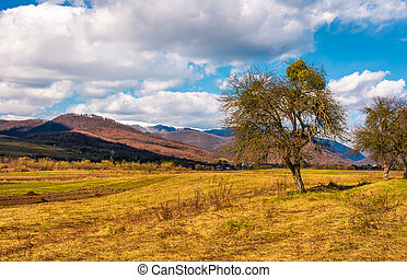 leafless trees on the rural field in mountains with snowy...