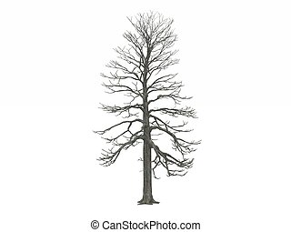 digital render of a tree model
