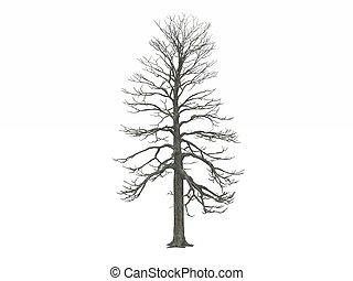 Leafless Winter tree - digital render of a tree model