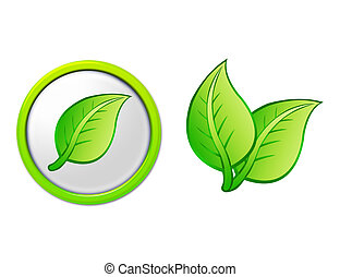 green and white leafs with button and isolated over white background