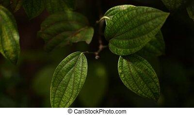 Leafs - Green leafs