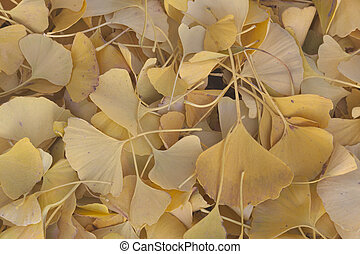Leafs in autumn, Essone department, France