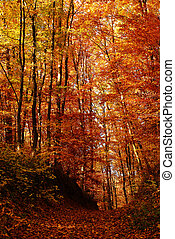 leafs in autumn forest