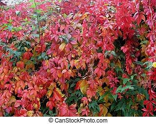 leafs in fall