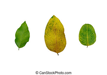 Leafs isolated on white background