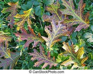 leafs of oak on a grass - Colourful foliage of oak on green ...