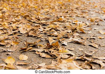 leafs on the floor