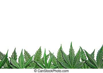leafs, verde, cannabis, frontera