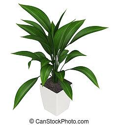 Leafy aspidistra houseplant - A healthy green leafy...