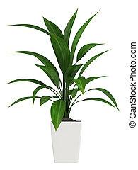 Leafy aspidistra houseplant - A healthy green leafy ...