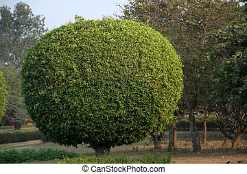 Bight green tree trimmed in the shape of a elliptical ball