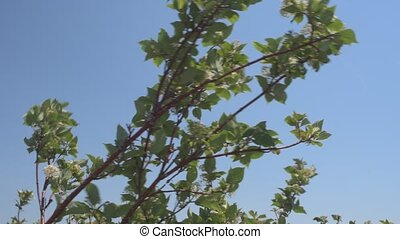Leafy branches swaying in wind on blue sky.