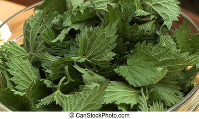 Leafy Green Herb in Bowl - Steady, close up shot of furry,...