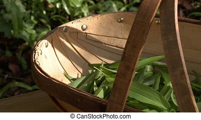 A wooden basket with some leafy greens in it