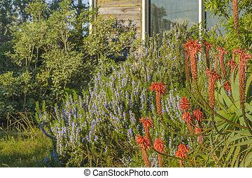 Leafy House Garden