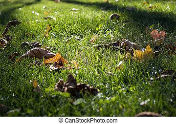 Leafy lawn autumn