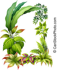 Leafy plants - Illustration of leafy plants on a white...