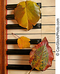 Leafy Trio on Piano - three fall leaves on ivory and ebony...