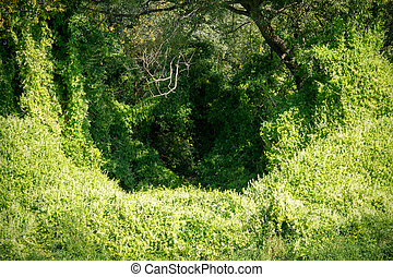 Leafy Vine in the Forest