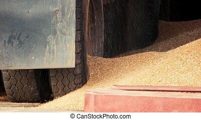 Leak of grain corns, slow motion. Truck wheels, back view,...