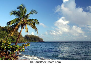 Leaning Palm Tree - A palm tree leaning over the ocean.