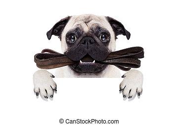 leash dog ready for a walk