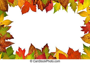leaves., ősz, határ