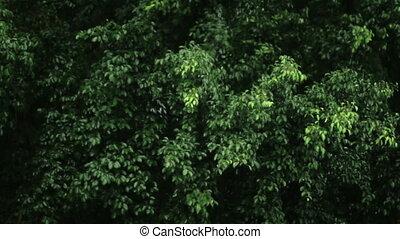 leaves, ветреный, дождливый