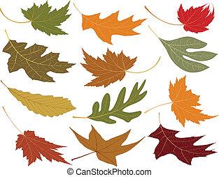 leaves, взорван, ветер, падать