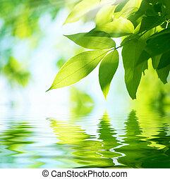 leaves., задний план, природа, зеленый